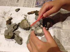【今年の自由研究その3】採掘した化石の仕上げ!
